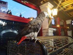 Papuga Petro